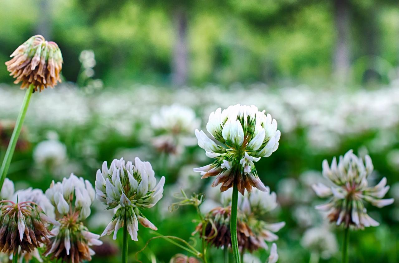 Jardim Botânico de Flores vence Prémio Nacional!